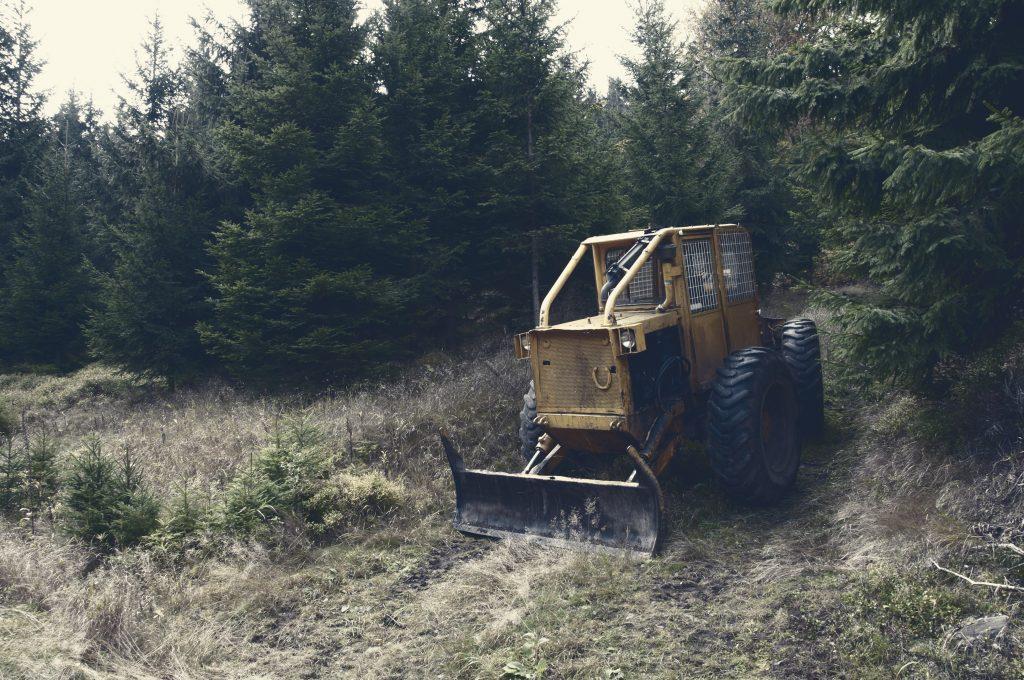 Logging operations causing deforestation