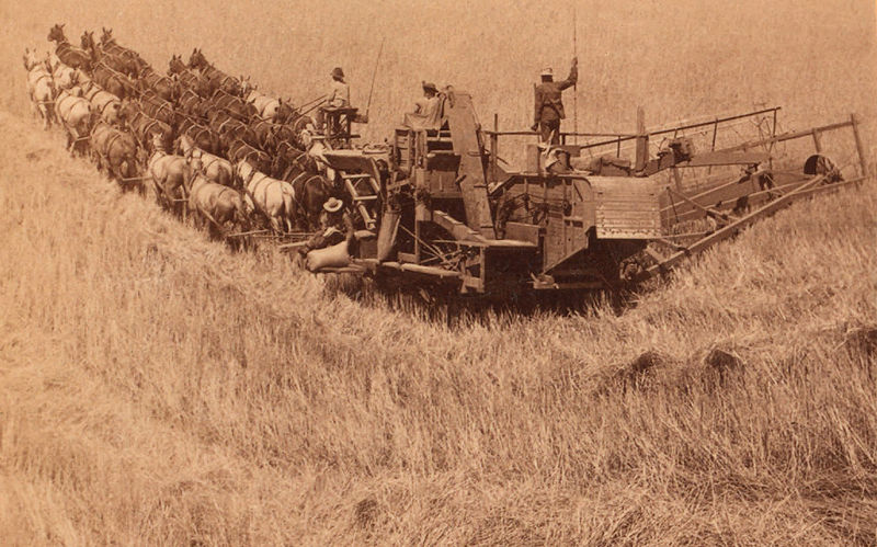 This image has an empty alt attribute; its file name is 800px-Combine_harvester_pulled_by_33_horses_Walla_Walla_ca._1902_b.jpg